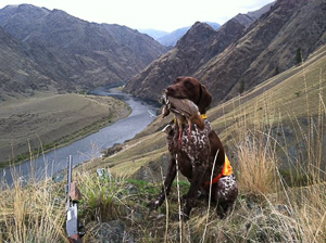 Snake River Hells Canyon Guided Chukar Hunt Cast and Blast Trips
